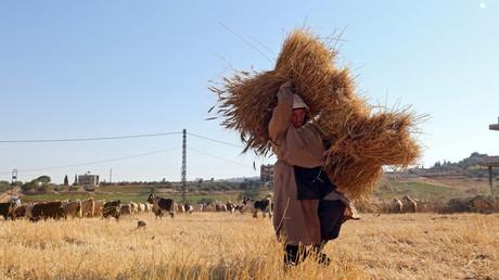 Archivbild: Eine ältere Frau mit Weizenernte im Dorf Markaba, Libanon