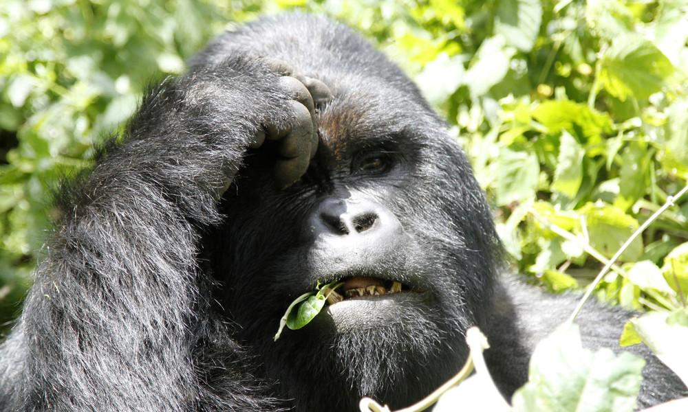WWF: Zwei Drittel weniger Arten in nur 50 Jahren