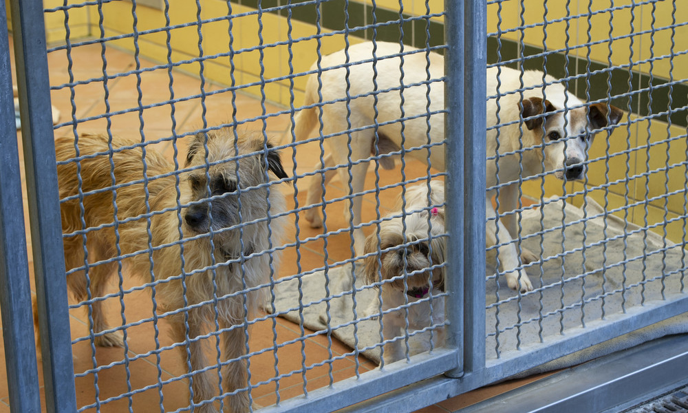 Einbruchserie in Tierheimen deutschlandweit: Belohnung ausgesetzt