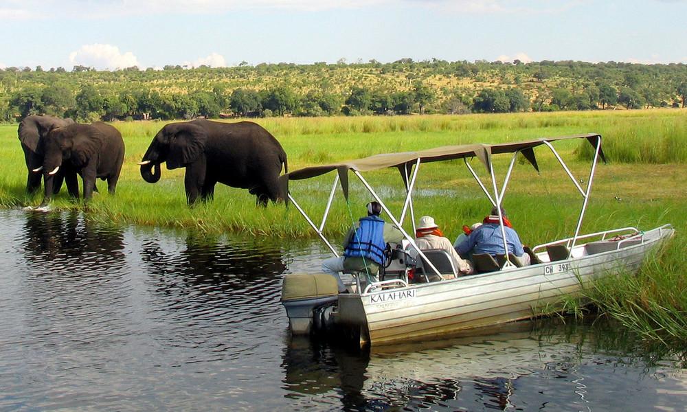 Killer im Wasser: Botsuanische Behörden finden mögliche Ursache für massenhaftes Elefantensterben