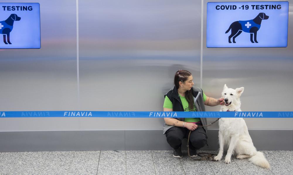Spürhunde identifizieren am Flughafen von Helsinki Corona-Infizierte