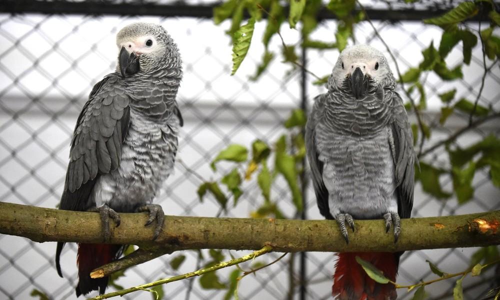 Wildpark entfernt Papageien wegen Beschimpfung von Besuchern