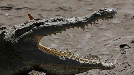 Mit aufgerissenem Maul soll das Tier am Ufer der Unstrut gesehen worden sein (Symbolbild).