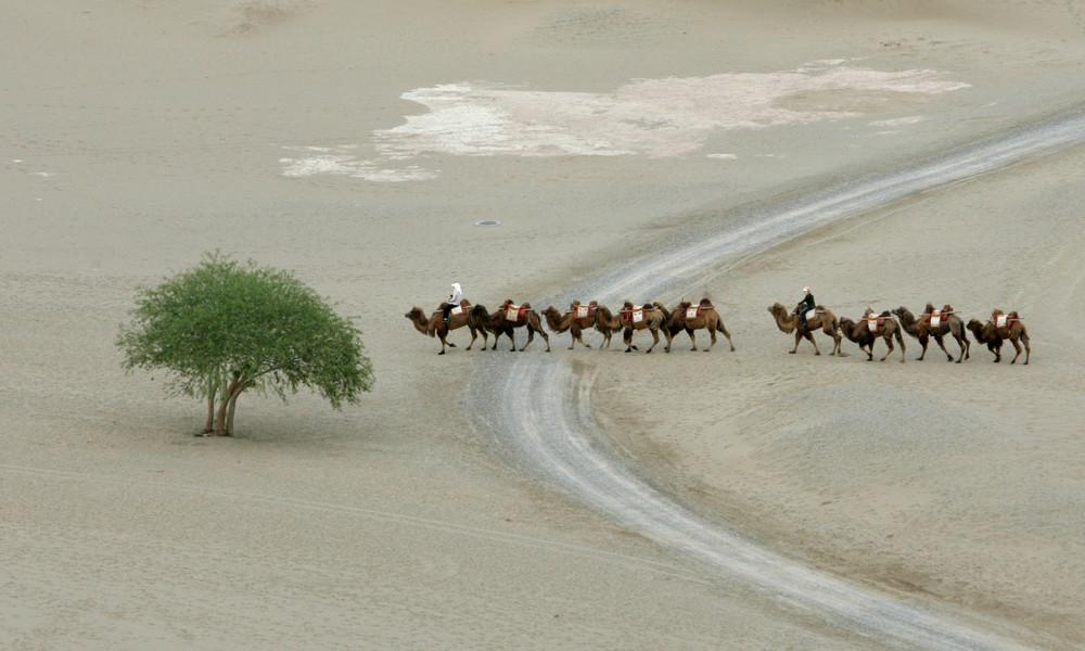 Neue Studie überrascht: In der Sahelzone und der Sahara wachsen Milliarden Bäume