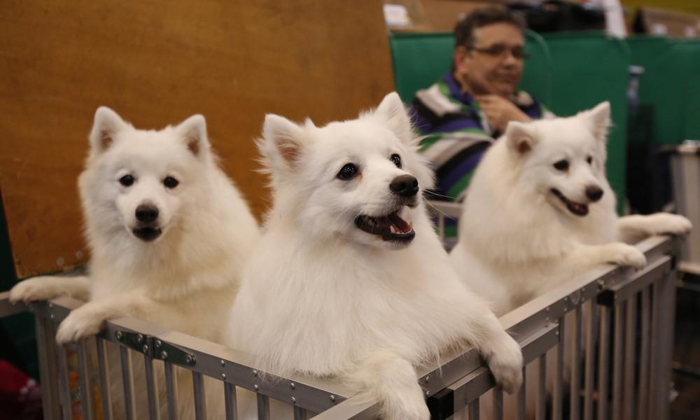 England: Entführungen von Hunden nehmen seit Corona deutlich zu