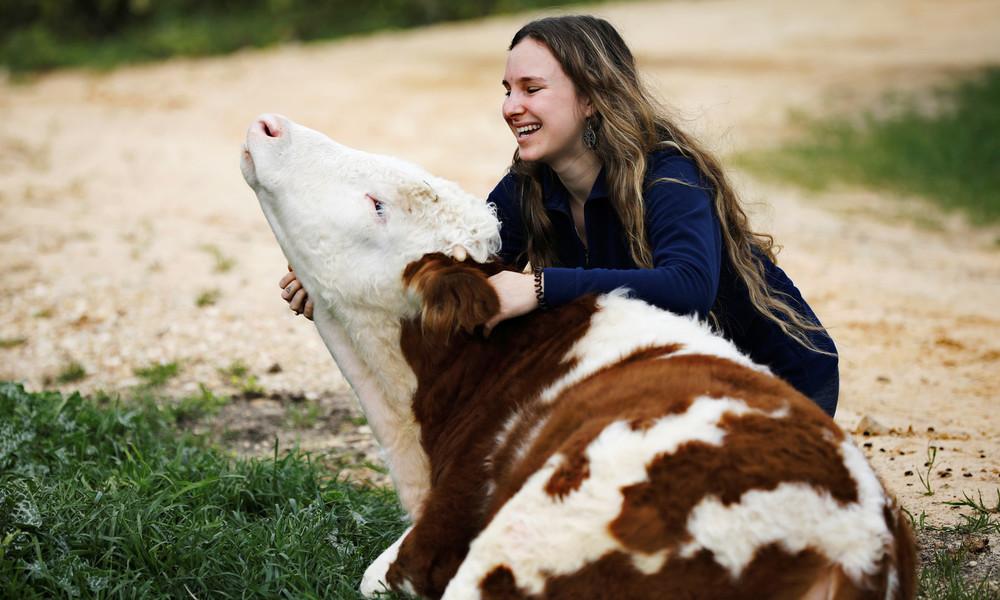 Neuer Wellnesstrend für Stressabbau: Kuscheln mit Kühen