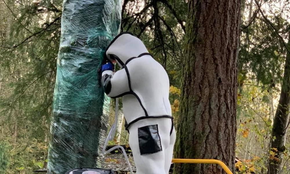 USA: Schädlingsbekämpfer entfernen erstmals Nest von Asiatischen Riesenhornissen