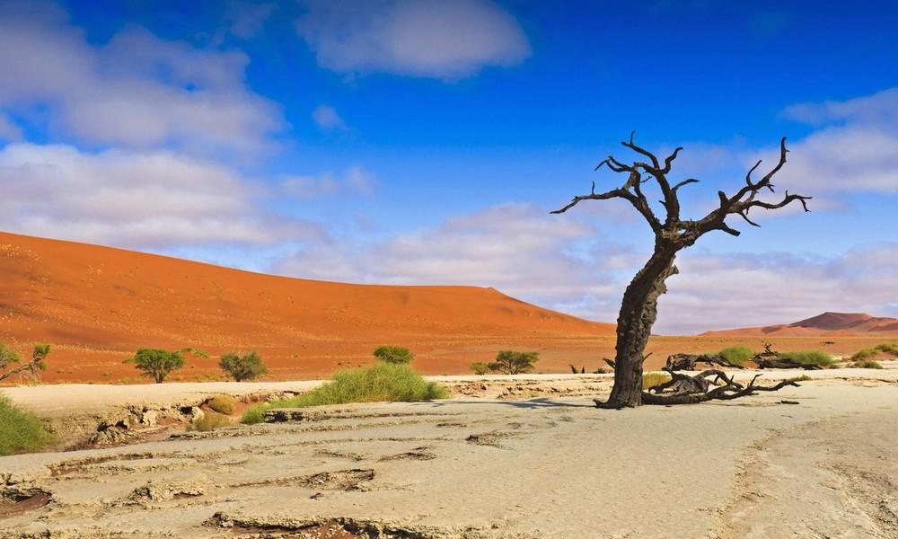 Im Namen des Klimas: Hamburger Umweltbehörde will Steinkohle durch Buschholz aus Namibia ersetzen