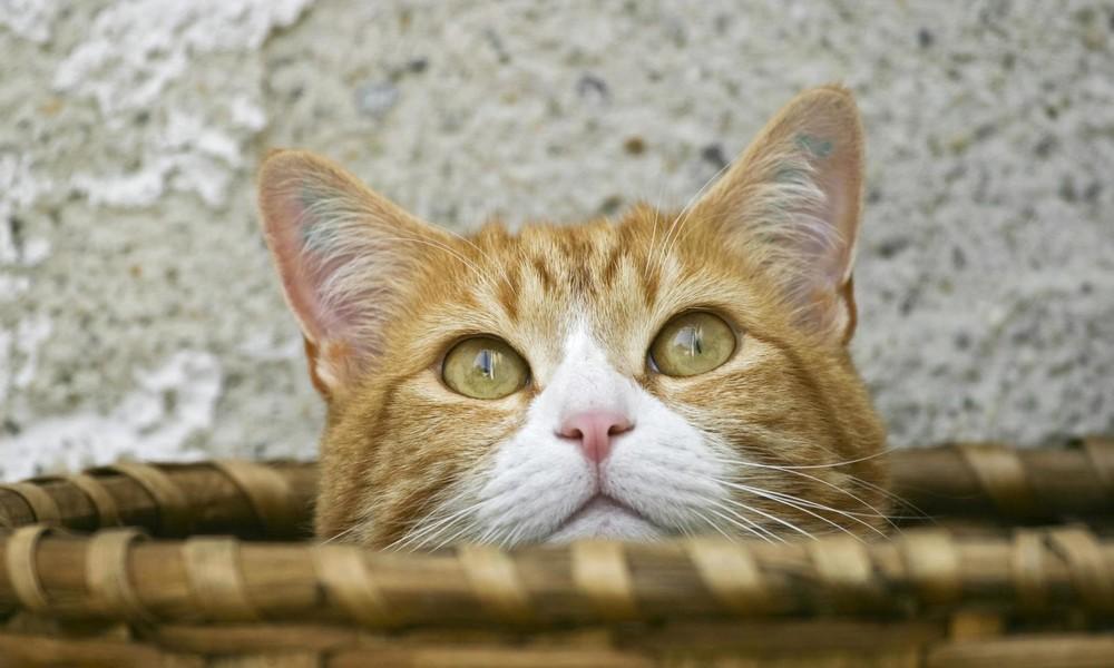 New York: Katze springt aus brennender Wohnung und rettet damit ihr siebtes Leben