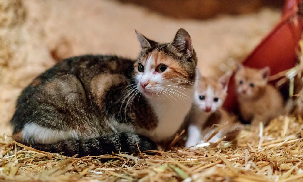 Mutterinstinkt macht Katze zur Löwin: Passant muss Hund und Hose retten