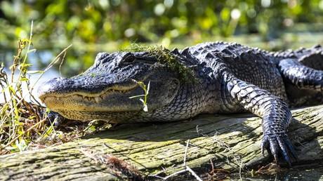 Russland: Fischer stößt auf Krokodil und wird beim Aufschlitzen des Reptils von Inspekteuren ertappt (Symbolbild)