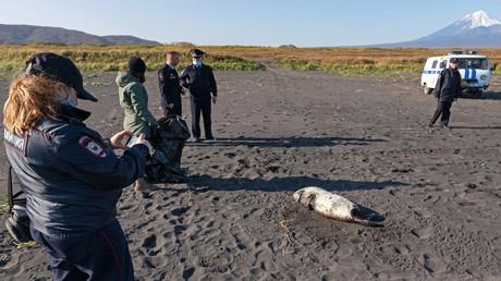 Russland: Massensterben von Meerestieren vor Kamtschatka – Wasserkontamination als mögliche Ursache