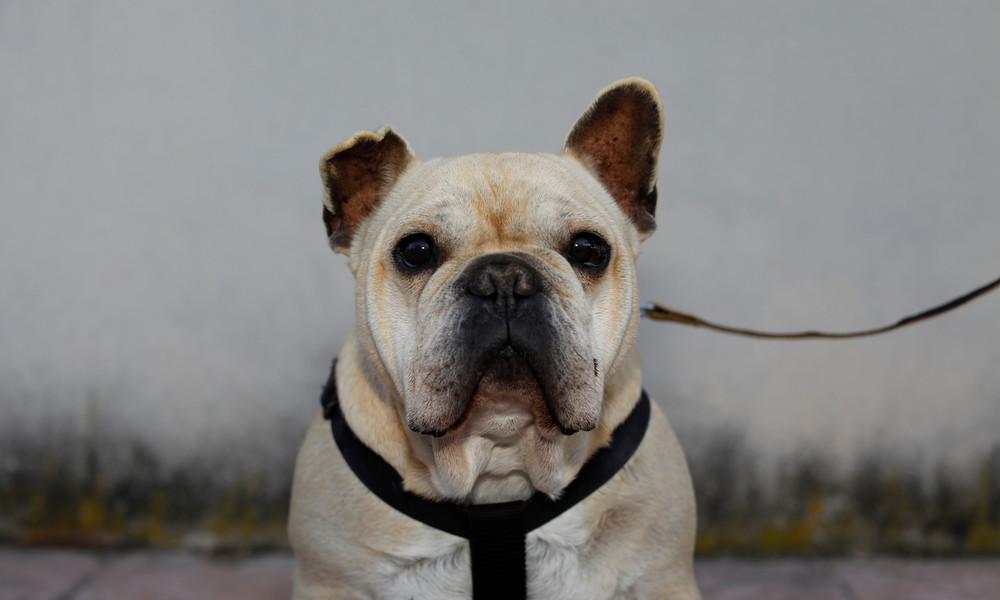 Ort in Kentucky wählt Hund zum Bürgermeister