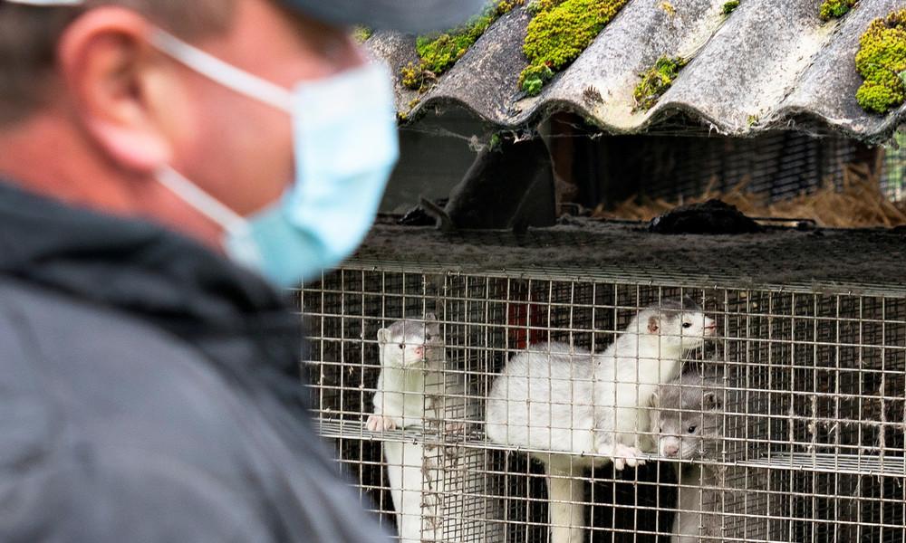 Zur Eindämmung von Coronavirus-Mutation: Dänemark riegelt Norden ab