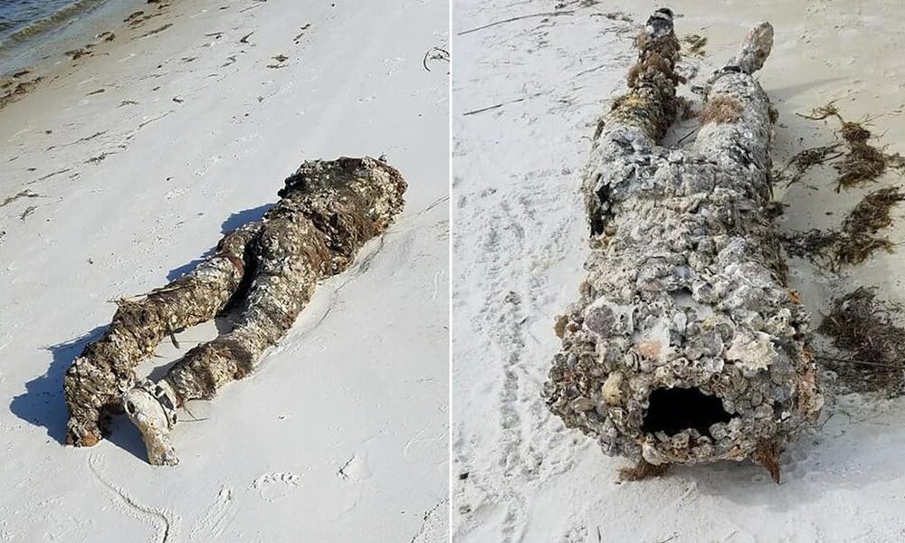 Eine Leiche am Strand? Badegast alarmiert Polizei – Umweltaktivistin löst Fall an Ort und Stelle