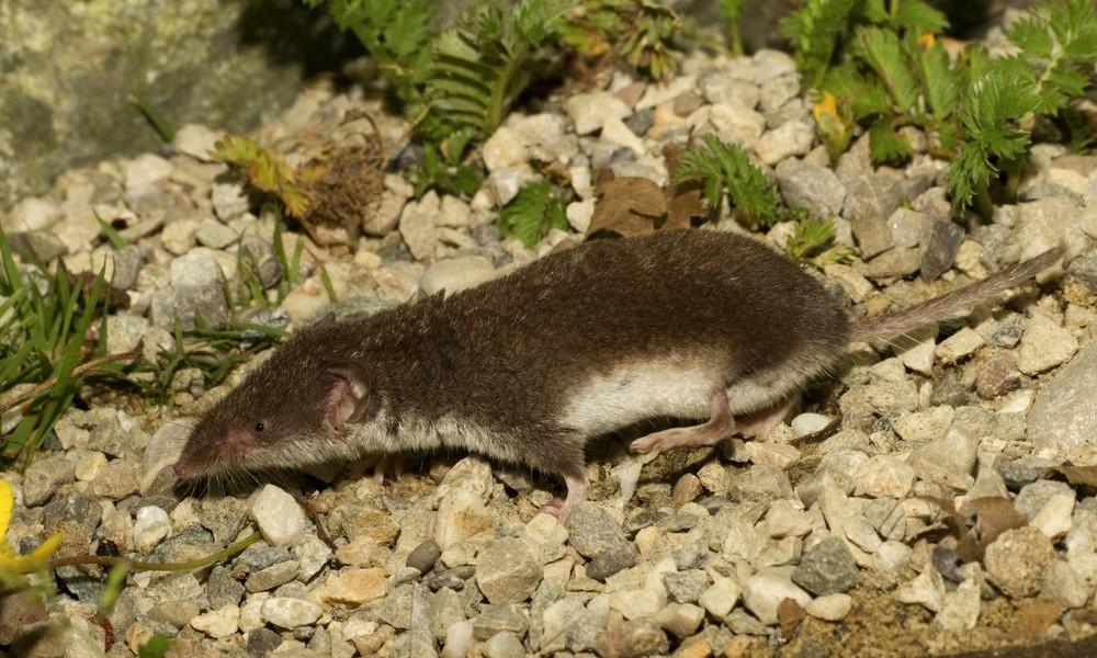 RKI veröffentlicht neue Studie über das Bornavirus: Zwei Todesfälle in diesem Jahr in Bayern