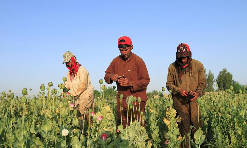 Afghanistan: USA rein – Opiumproduktion hoch