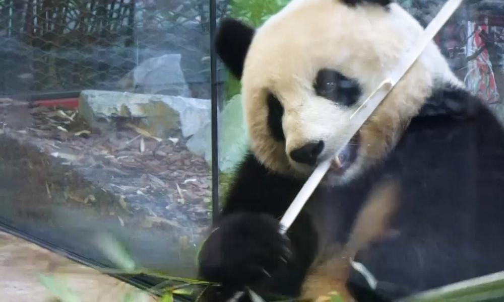 Berliner Zoo im Lockdown-Modus: Trotz offenem Außengelände kaum Besucher (Video)