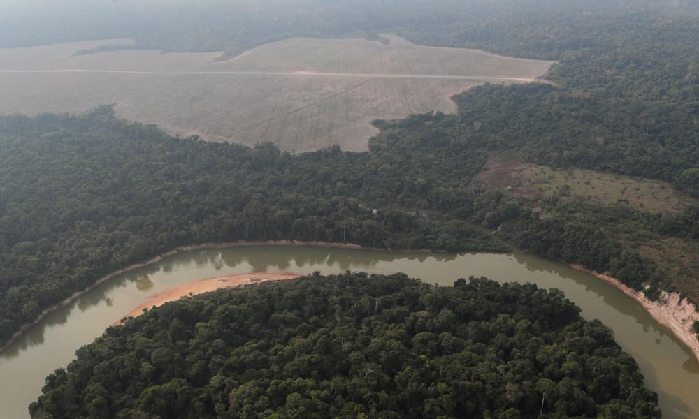 Drei Fußballfelder pro Minute: Abholzung im brasilianischen Amazonasgebiet auf Höchststand seit 2008
