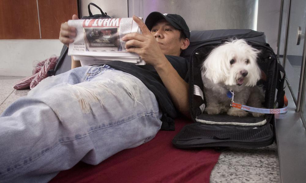 """US-Verkehrsministerium ändert Richtlinie über """"Tiere zur emotionalen Unterstützung"""" in Flugzeugen"""