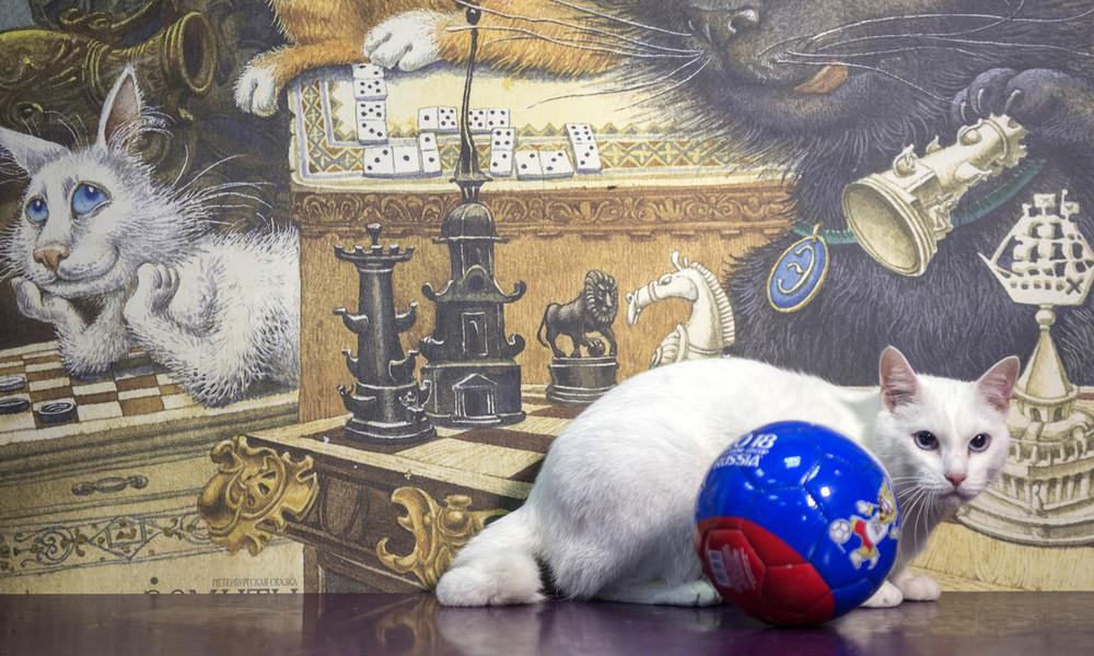 Kuriose Erbschaft: Franzose vermacht Teil seines Vermögens russischen Museumskatzen