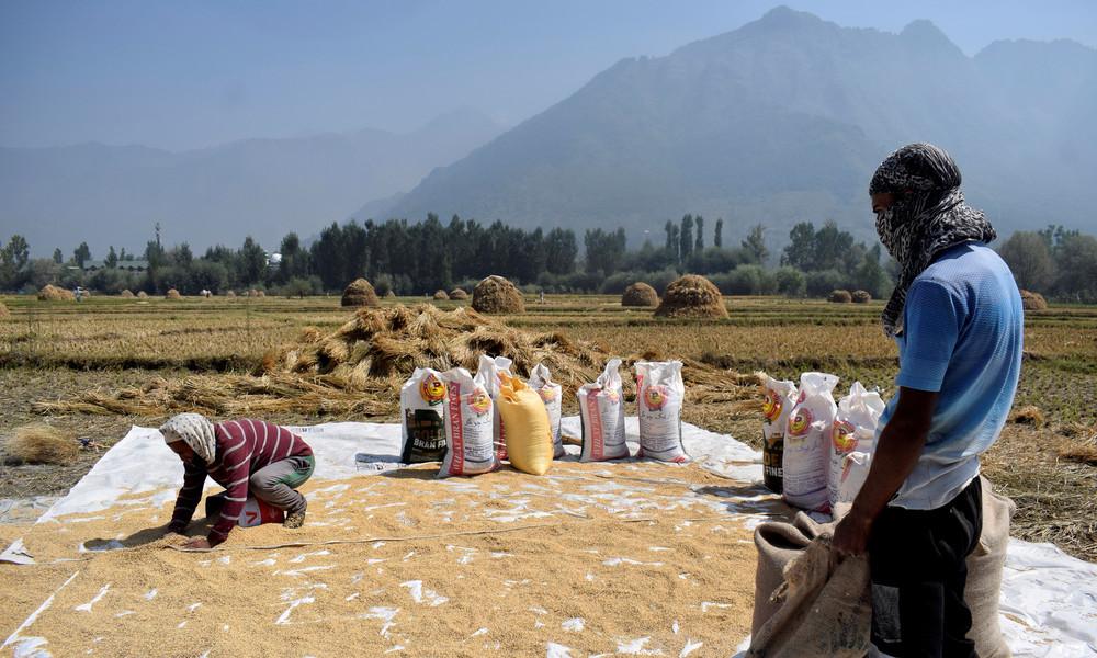 Trotz Handelsstreits: China kauft zum ersten Mal seit mehreren Jahrzehnten wieder indischen Reis