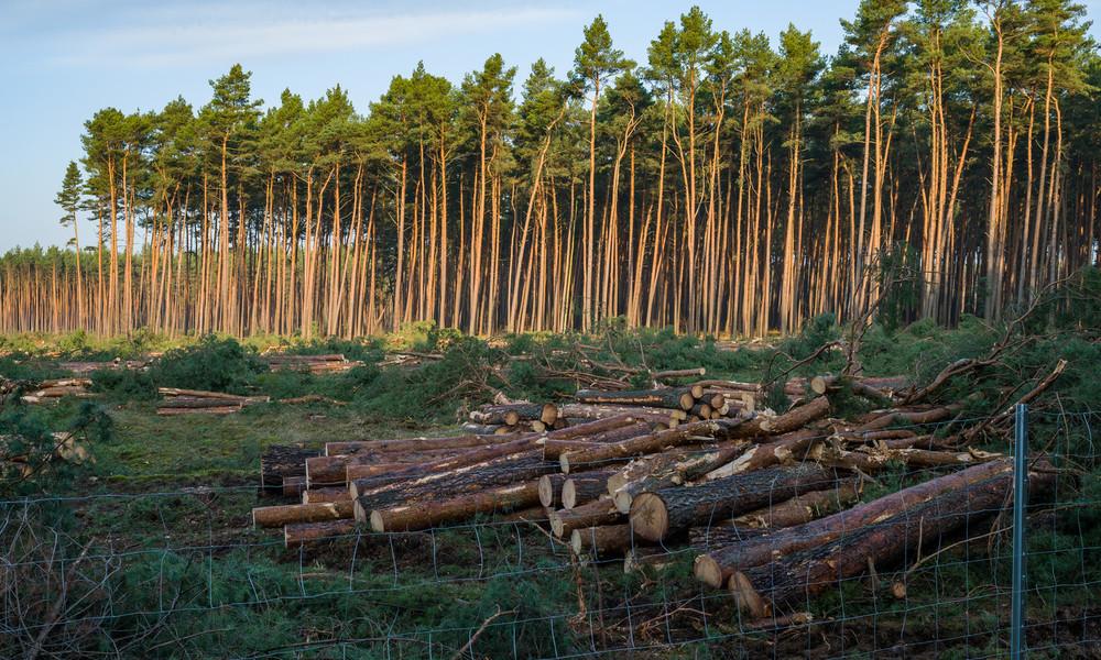 Verwaltungsgericht Frankfurt (Oder): Tesla darf den Wald in Grünheide weiter roden
