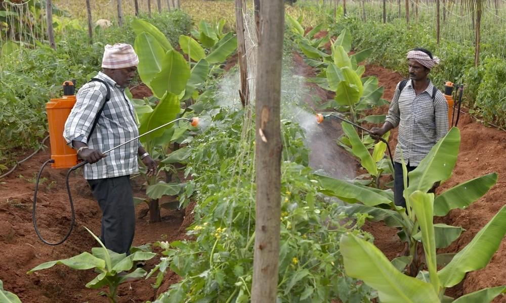 Studie: Jedes Jahr vergiften sich weltweit 385 Millionen Menschen durch Pestizide