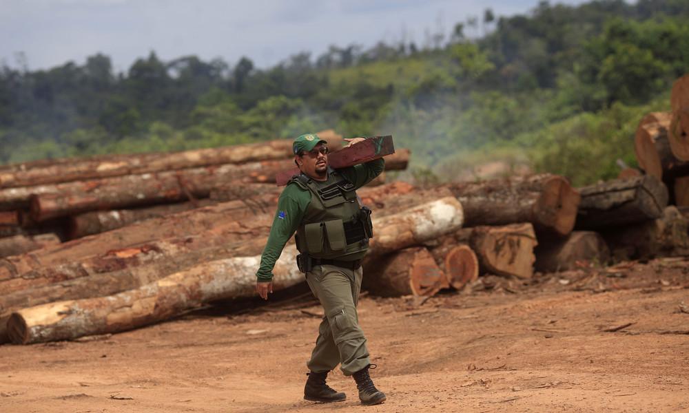 Illegale Abholzung: Brasilianische Polizei beschlagnahmt mehr als 6.200 Lkw-Ladungen Holz