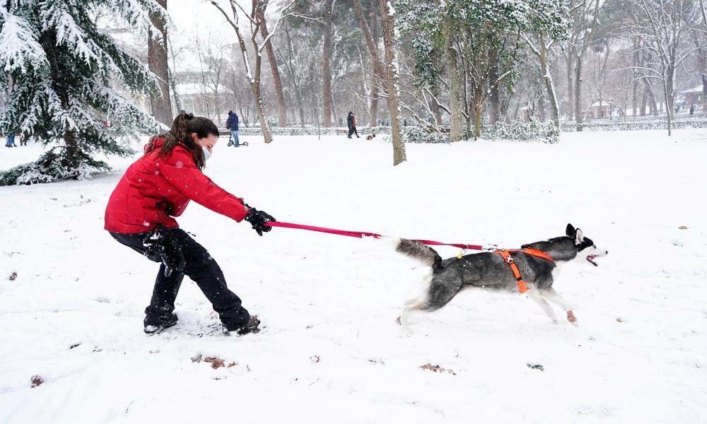 Schneefall legt Madrid lahm – Zeit für Hundeschlitten