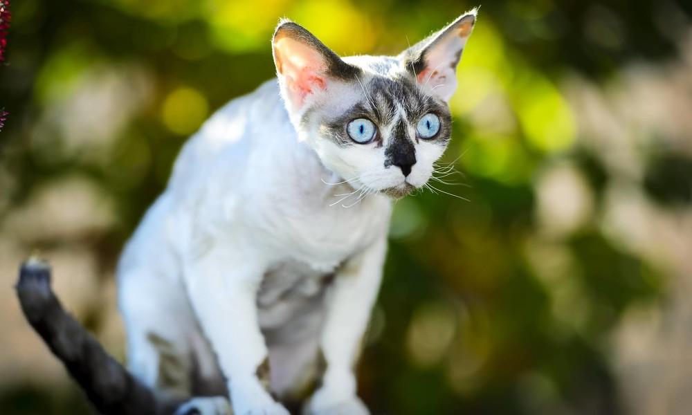 """Neues """"Problem"""" für Berlins Justizsenator: Jetzt kümmert er sich auch noch um herumstreunende Katzen"""