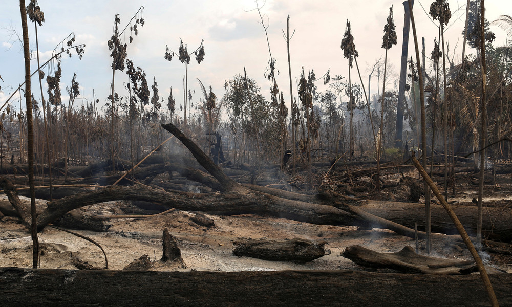 """WWF: Massive Regenwaldabholzung bedroht """"das Leben, wie wir es kennen"""""""