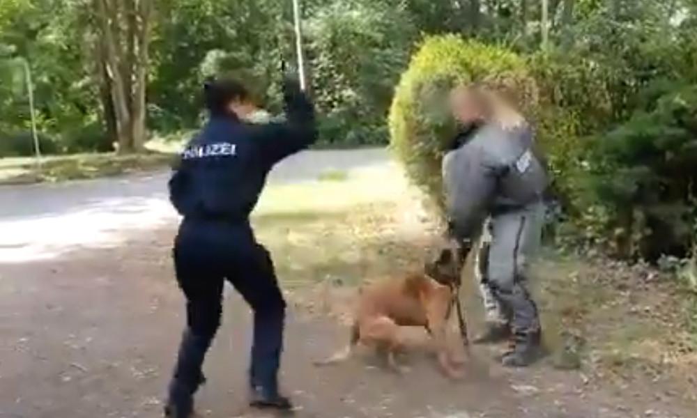 """""""Druff jetzt auf das Vieh!"""" – Kritik an brutalem Polizeihundetraining ebbt nicht ab"""