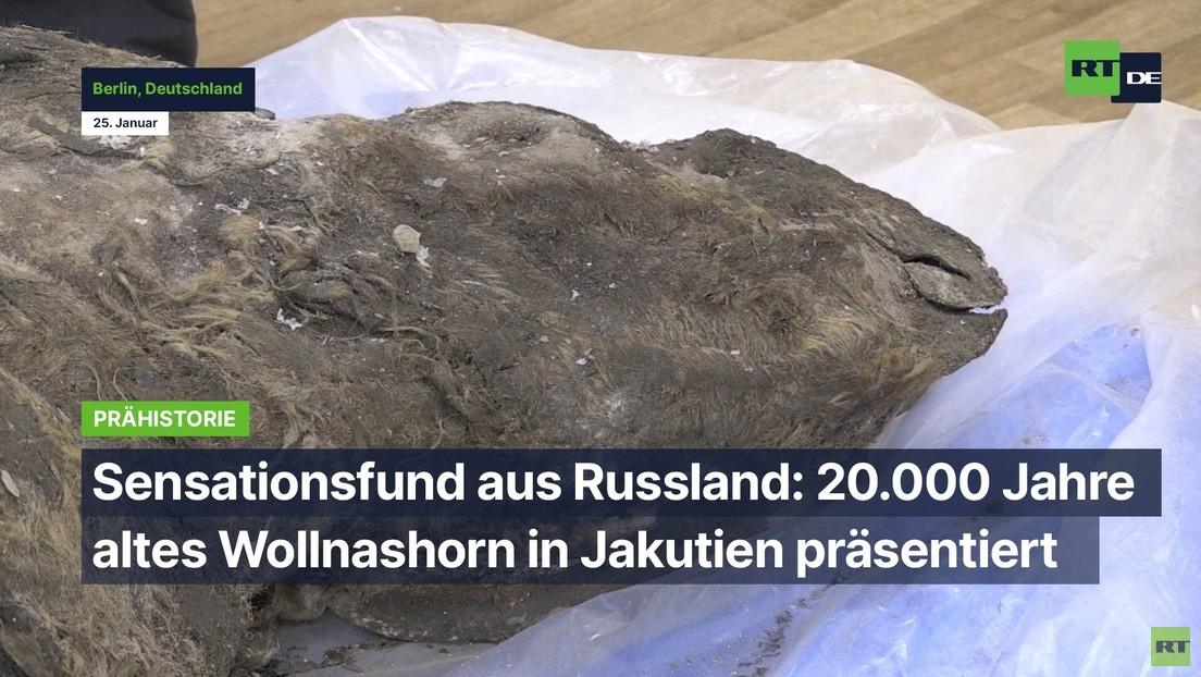 Russland: Überreste eines 20.000 Jahre alten Wollnashorns in Jakutien präsentiert