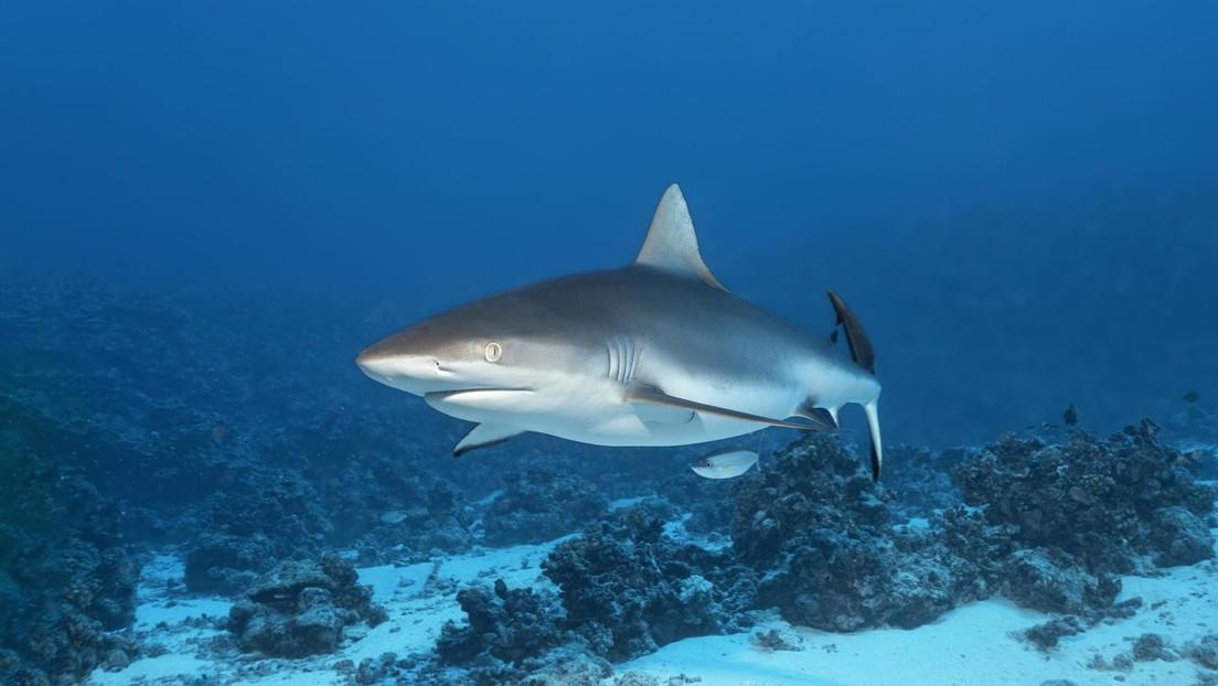 Zahl der Haie und Rochen seit 1970 um über 70 Prozent gesunken