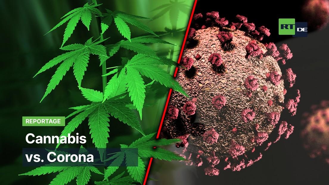 Cannabis vs. Corona: Extravagantes Mittel gegen die Pandemie?