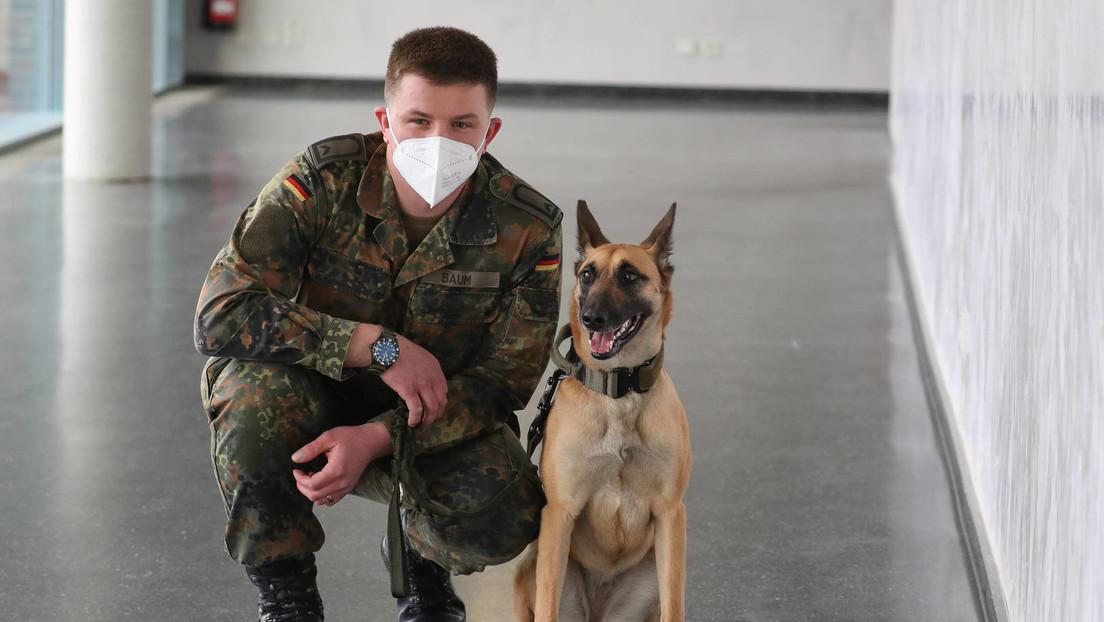 """Niedersachsen: Bundeswehr-Spürhunde sollen Corona-Verdachtsfälle """"erschnüffeln"""""""