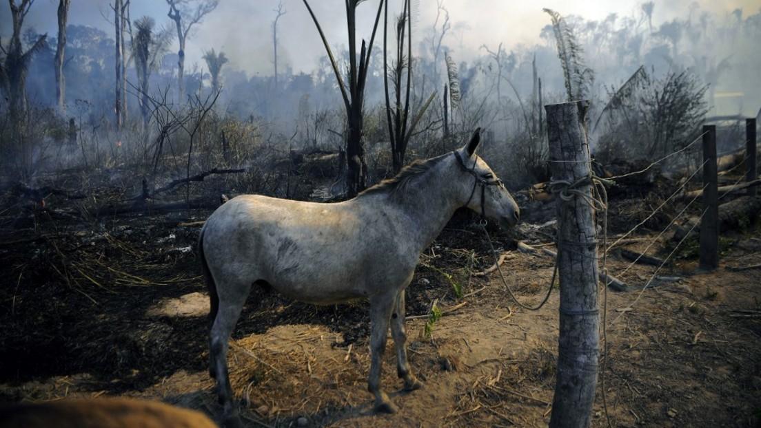"""""""Ökozid"""" – Umweltzerstörung soll laut Völkerrechtsexperten internationales Verbrechen werden"""