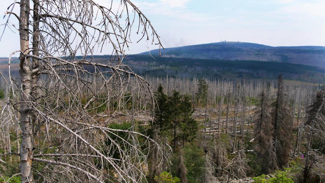 """Baum- und Waldsterben in Deutschland – WWF: """"Wir trocknen unsere eigene Landschaft systematisch aus"""""""