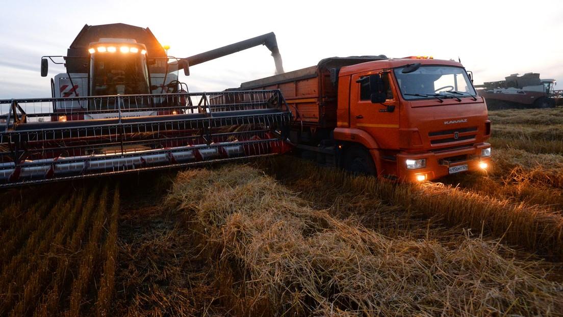Russland verdoppelt Weizen-Exportsteuer zur Stabilisierung der heimischen Lebensmittelpreise