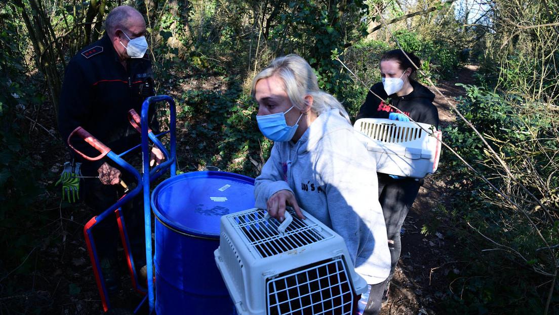 Fast 200 tote Katzen in einer Gartenlaube in Saarbrücken entdeckt