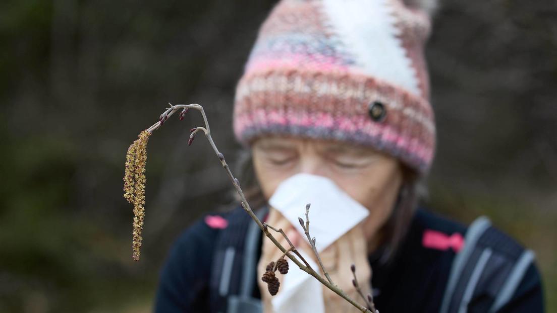 Studie: Mehr Corona-Fälle bei stärkerem Pollenflug