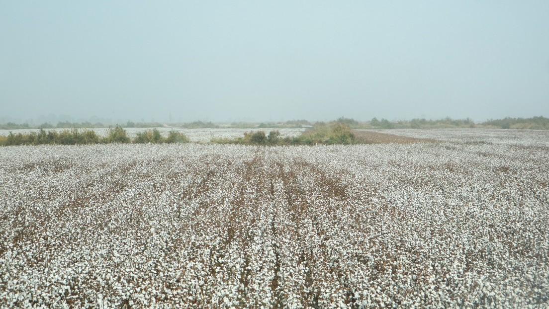 China warnt westliche Firmen wegen Baumwollboykott: Sie schaden sich nur selbst
