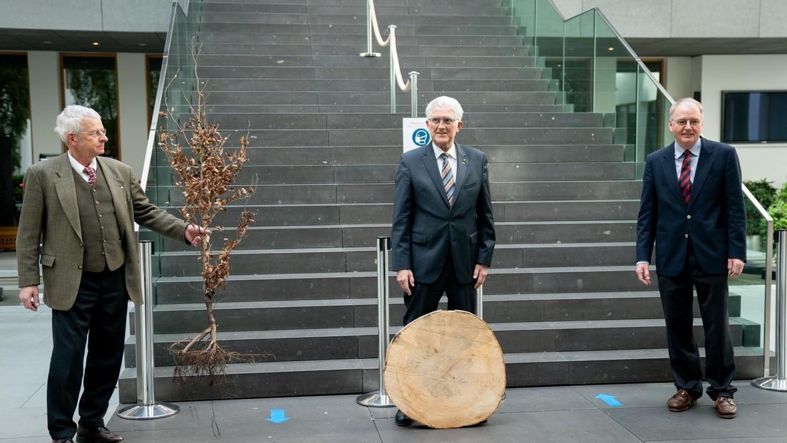 Forstwirtschaftsrat beziffert Schäden durch Trockenheit und Hitze