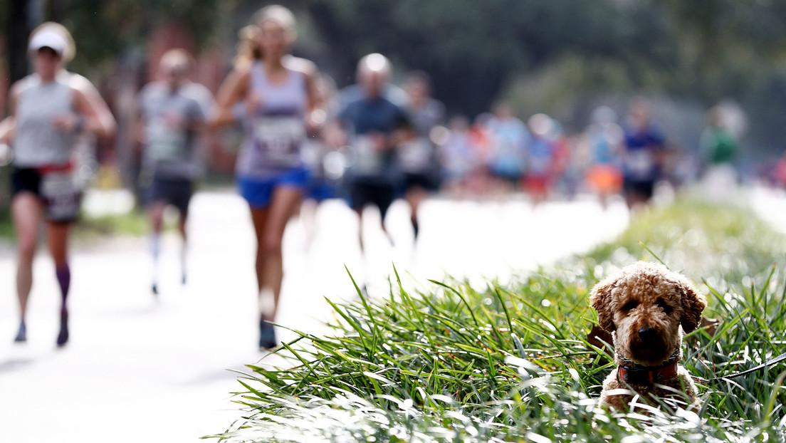 Überraschender Sieger: Hund läuft bei Leichtathletik-Wettbewerb den Teilnehmerinnen davon (Video)