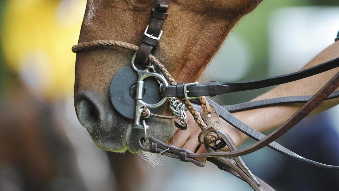 Ein gutes Pferd springt nicht höher, als es muss: Israelis führen Pferd in Aufzug hinein – Festnahme
