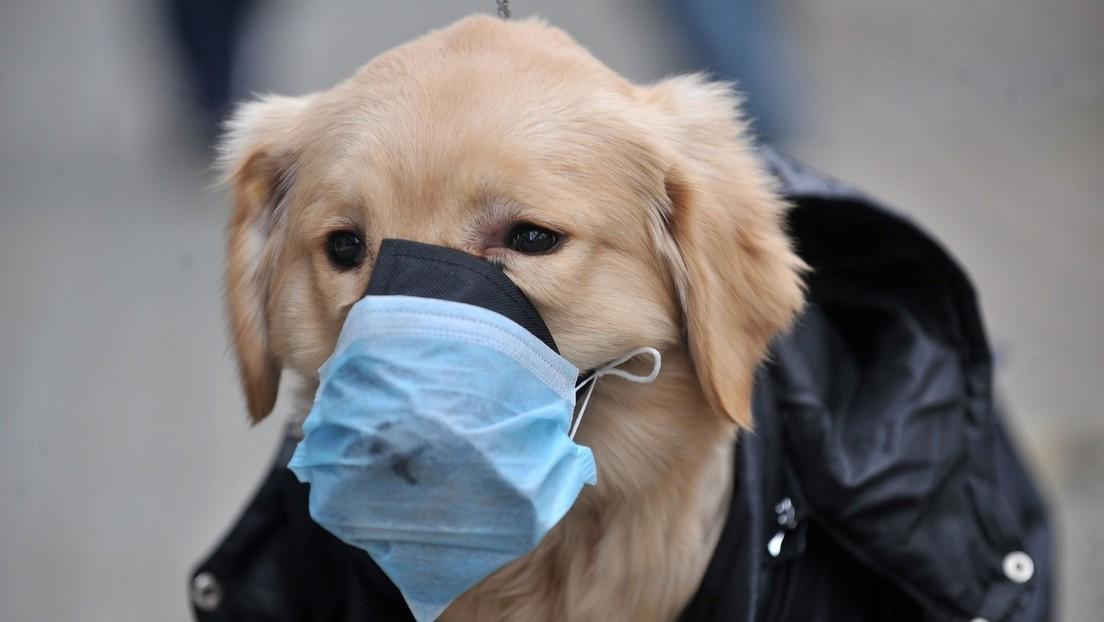 Tierschutz auch in Zeiten der Pandemie: Russischer COVID-19-Impfstoff für Tiere zum Einsatz bereit