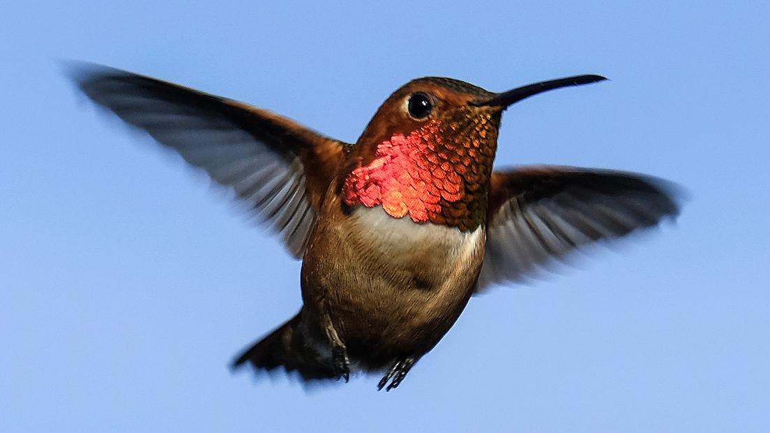 Kolibri auf Großbildschirm erschreckt US-Moderator in Live-Sendung