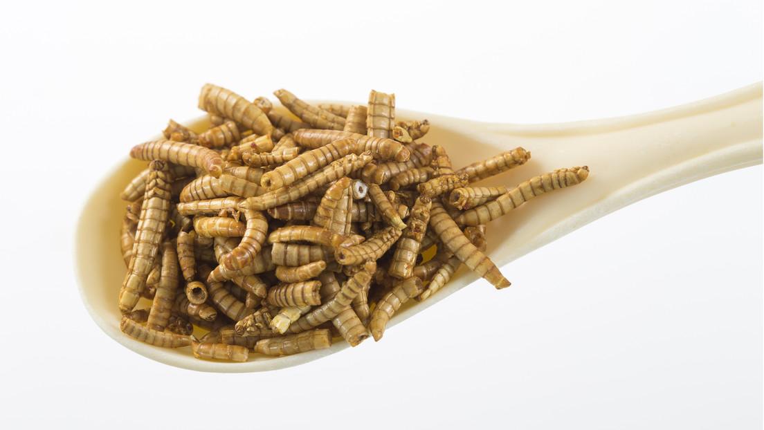 EU lässt Mehlwürmer als Lebensmittel zu