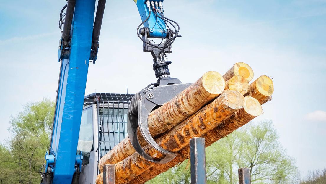 Knappheit an Bauholz wegen Exportboom und privater Nachfrage